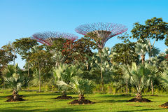 Supertrees in the Gardens by the Bay park, Singapore Stock Photography