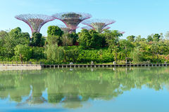 Supertrees in the Gardens by the Bay park, Singapore Royalty Free Stock Photography