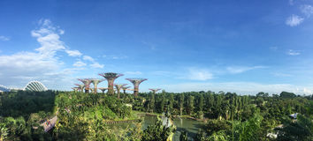 Supertrees am Garten durch die Bucht in Singapur Stockfotos