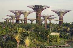Supertrees in giardino dalla baia a Singapore del sud Immagine Stock Libera da Diritti