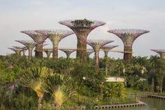 Supertrees in giardino dalla baia a Singapore del sud Immagini Stock