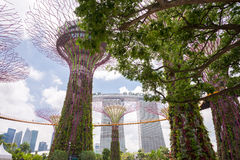 Supertrees Grove in Gardens by the Bay Stock Image