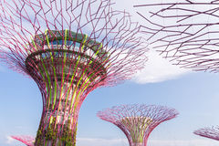 Supertrees Grove in Gardens by the Bay Royalty Free Stock Photo