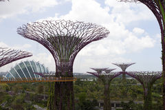 Supertrees Grove in Gardens by the Bay. Royalty Free Stock Images