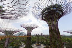 Supertrees Grove in Gardens by the Bay Stock Photos
