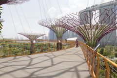 Supertrees Grove in Gardens by the Bay Stock Photography