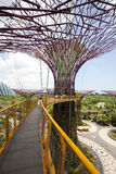 Supertrees Grove in Gardens by the Bay. Stock Photo