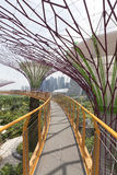 Supertrees Grove in Gardens by the Bay. Stock Photography