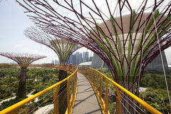 Supertrees Grove in Gardens by the Bay Stock Photo