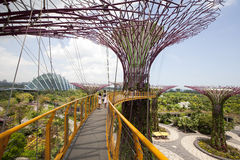 Supertrees Grove in Gardens by the Bay. Royalty Free Stock Photography