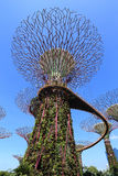The Supertrees Grove at Gardens by the Bay Royalty Free Stock Photo