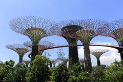 The Supertrees Grove at Gardens by the Bay Stock Photo
