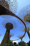 The Supertrees Grove at Gardens by the Bay Stock Photos