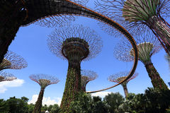 The Supertrees Grove at Gardens by the Bay Royalty Free Stock Images