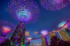 Supertrees iluminado nos jardins pela baía na noite, Singapura foto de stock royalty free