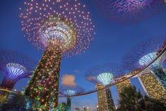 Supertrees lumineux dans les jardins par la baie la nuit, Singapour Photographie stock