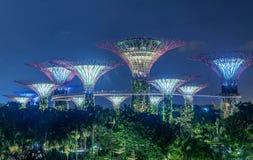 Supertrees lumineux dans les jardins par la baie la nuit, Singapour Images libres de droits