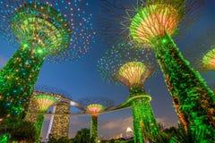 Supertrees lumineux dans les jardins par la baie la nuit, Singapour Photos libres de droits