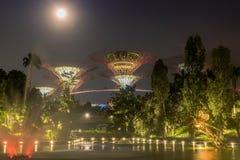 Supertrees lumineux dans les jardins par la baie la nuit, Singapour Photo libre de droits