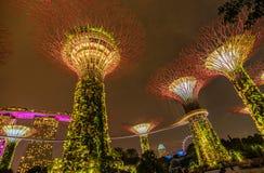 Supertrees lumineux dans les jardins par la baie la nuit, Singapour Photos stock