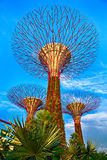 Supertrees in Marina Bay Sands, Singapore Stock Fotografie
