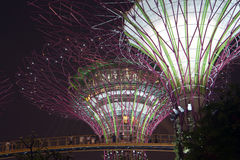 Supertrees in the new botanical gardens , Singapore Stock Photos