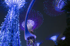 Supertrees in the new botanical gardens , Singapore Stock Image