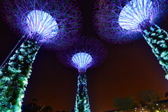 Supertrees at night. Gardens by the bay. Singapore Royalty Free Stock Photos