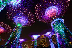 Supertrees at night. Gardens by the bay. Singapore Stock Photos