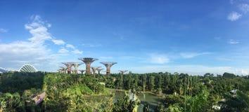 Supertrees no jardim pela baía em Singapura Fotos de Stock