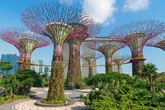 Supertrees på trädgårdar vid fjärden parkerar, Singapore Arkivbild