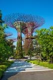 Supertrees på trädgårdar vid fjärden parkerar, Singapore Royaltyfria Foton