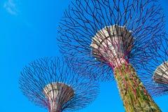 Supertrees på trädgårdar vid fjärden, Singapore Royaltyfria Foton