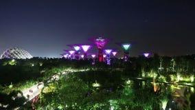Supertrees przy nocą zbiory
