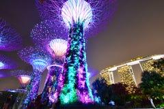 Supertrees przy nocą Ogródy zatoką Singapur Zdjęcie Stock