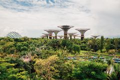 Supertrees przy ogródami zatoką w Singapur Zdjęcia Stock
