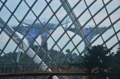 Supertrees, Singapura, Ásia imagens de stock royalty free