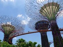 Supertrees and Skyway at Gardens by the Bay in Singaopre. In Singapore`s famous Gardens by the Bay Botanical Park, the futuristic artificial tree monuments known stock photos