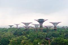Supertrees von Singapur lizenzfreie stockfotos