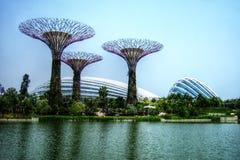 Supertrees växthus och sländasjö - Singapore - trädgårdar vid fjärden Arkivfoto