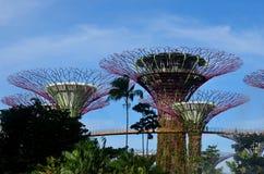 Supertrees y OCBC Skyway en los jardines por la bahía Singapur Imagen de archivo