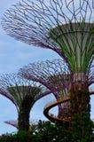 Supertrees y OCBC Skyway en los jardines por la bahía Singapur Fotografía de archivo