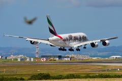 Supertunnel-bohrwagen Emirat-Airbusses A380 vereinigte herein für Livreelandung der wild lebenden Tiere an internationalem Flugha Lizenzfreie Stockfotografie