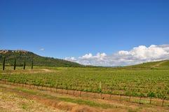 superTuscan sangiovese winnica Włochy Zdjęcie Royalty Free