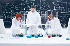 Supervised laboratory experiment Stock Photography