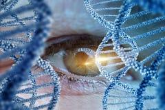 Supervisión de la DNA humana Foto de archivo libre de regalías