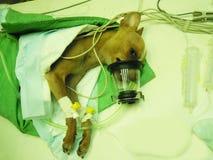 Supervisión del paciente Foto de archivo