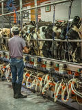 Supervising automated milking stock images