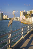 Supervisore del centro dei pesci del litorale del golfo Fotografie Stock Libere da Diritti