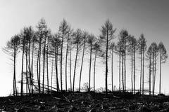 Supervivientes - bosque de Galloway, Escocia imagenes de archivo